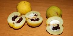 Айва яблоковидна Золотиста