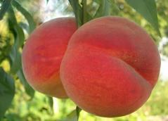 Персик Вайн Голд Т3 румянец на плодах