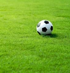 Газонная трава Спорт