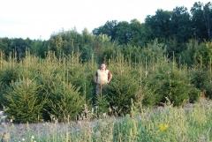 Ель европейская Picea abies