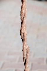 Buxus sempervirens ball штамб