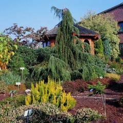 Можжвельник обыкновенный Хорстманн <br>Ялівець звичайний Хорстманн <br>Juniperus communis Horstmann