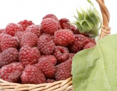 Rubus idaeus Polka
