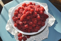 Raspberries remontant Polka