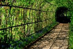Варіант оформлення тунелю Фундуком звичайним Косфорд