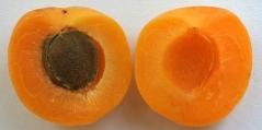 Поперечний розріз плода Абрикоса Поліського крупноплідного