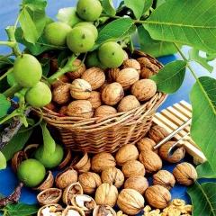 Грецкий орех сорта Кишиневский