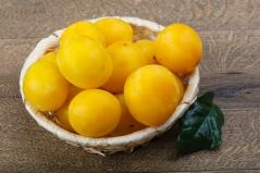 Слива жовта Медова