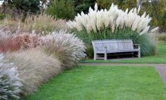Біла пампасна трава ціна