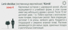 Модрина Kornik
