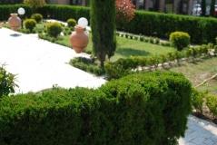 Жива огорожа із туї західної. Холмструп - одна із найкращих низкорослих сортів. Дуже щільна крона навіть без стрижки.