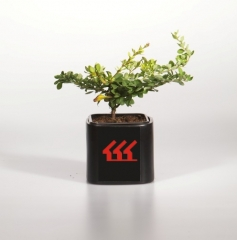 барбариса 'Green Carpet' питомник растений в Киеве