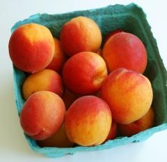 Apricot tree Сheeked
