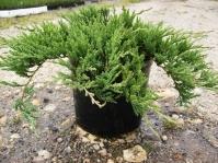 Ялівець горизонтальний Джейд Рівер <br> Можжевельник горизонтальный Джейд Ривер <br> Juniperus horizontalis Jade River