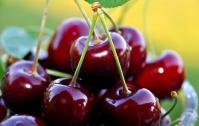 Вишня домашня Чудо-вишня / Чере-вишня (середня) <br>Вишня домашняя Чудо-вишня / Чере-вишня (средняя) <br>Prunus cerasus Cherry Miracle