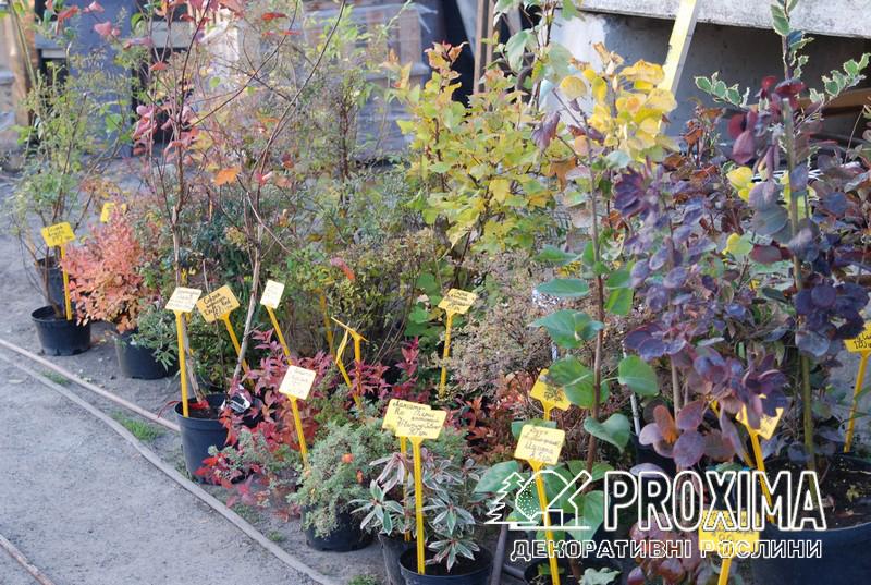 Осенью растения выглядят хуже, но это время - идеальное для посадки