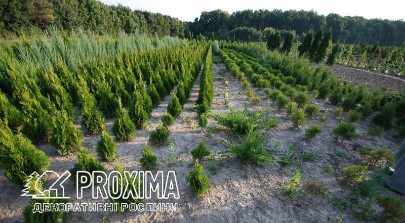 Питомник растений PROXIMA