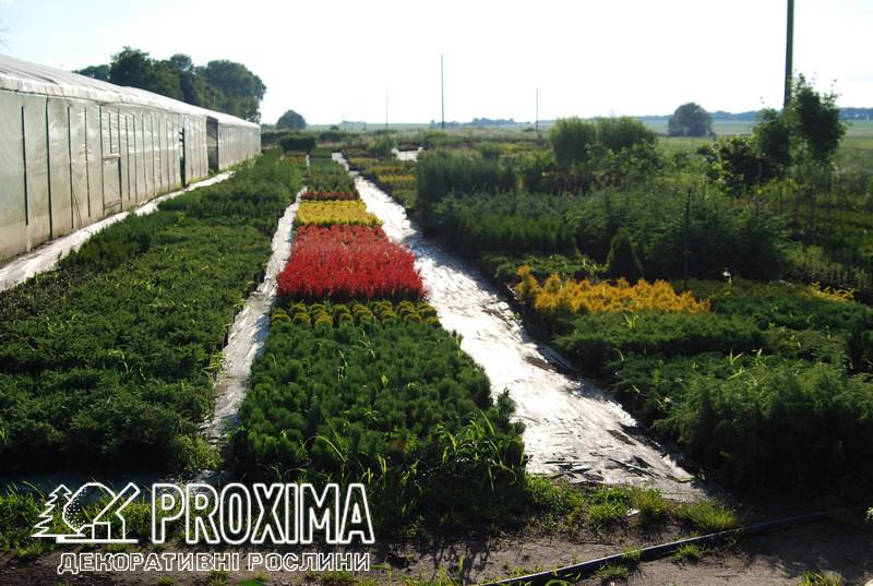 Питомник растений Проксима