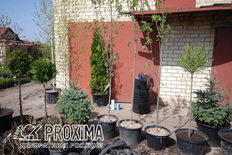 Подготовка растений к транспортировке