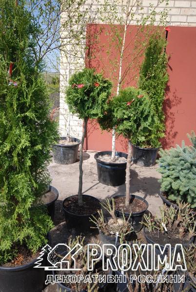 Растения для ландшафтного дизайна весна
