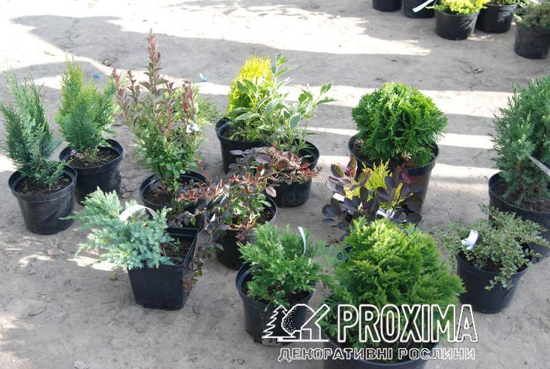 Растения для озеленения участка