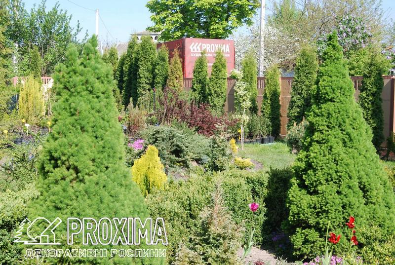 Растения Проксима