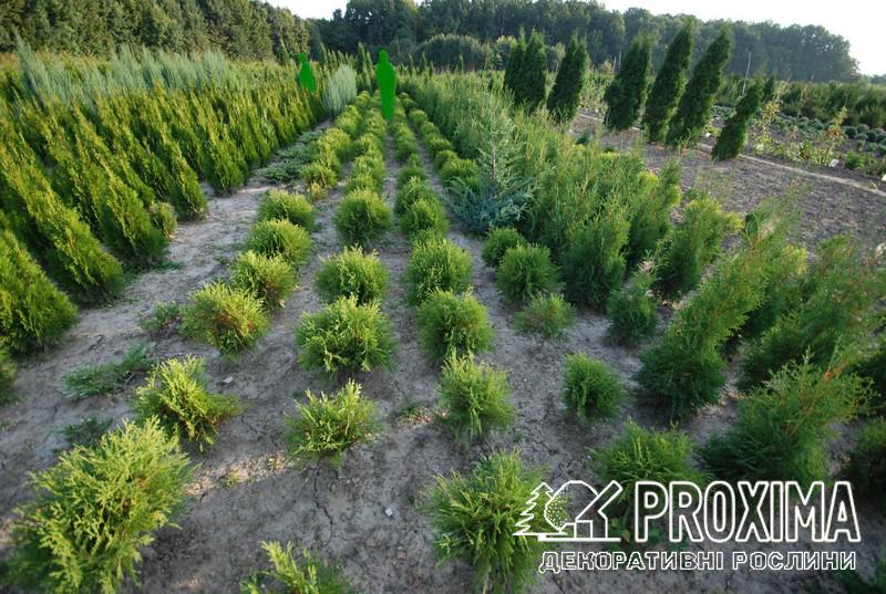 Розсадник рослин Проксіма