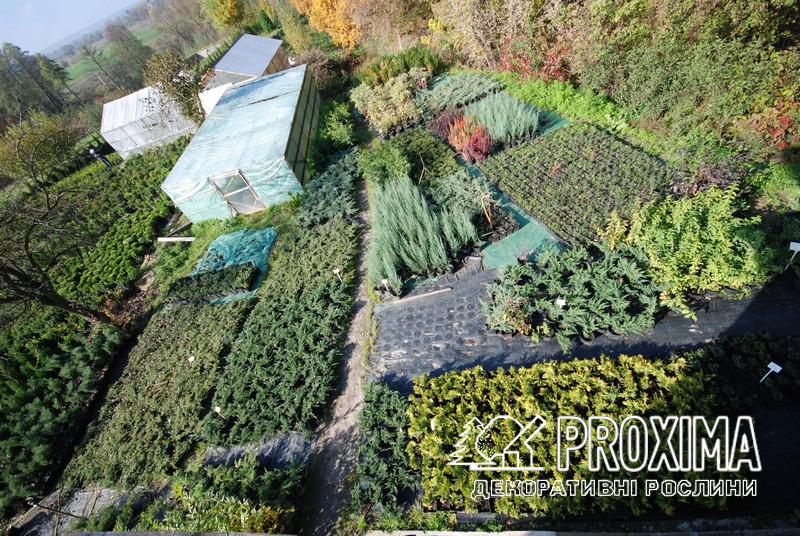 Садовий центр PROXIMA