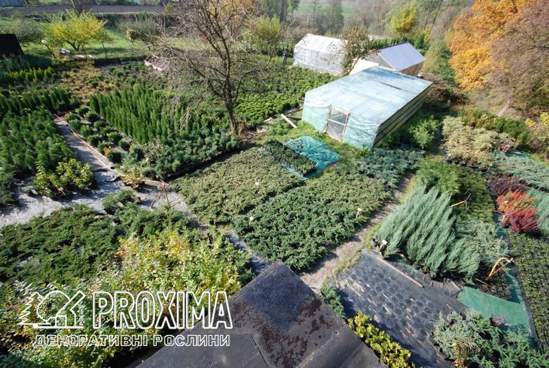 Садовий центр PROXIMA с. Жорновка
