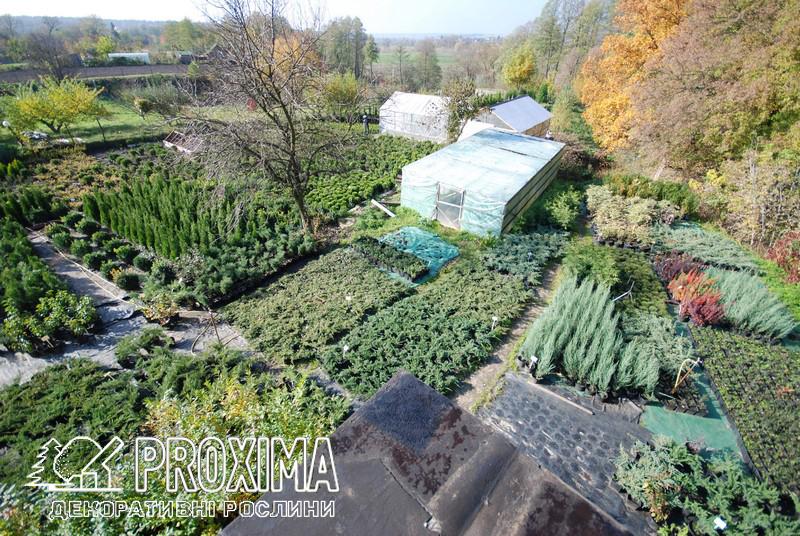 Садовий центр PROXIMA с.Жорновка 20 км от Киева