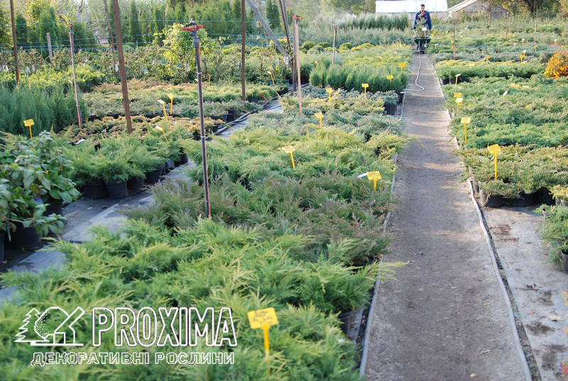 Садовий центр київська область
