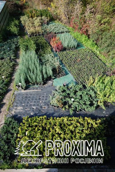 Садовий центр Проксима