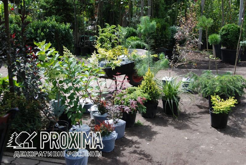 Садовый центр Киевская область