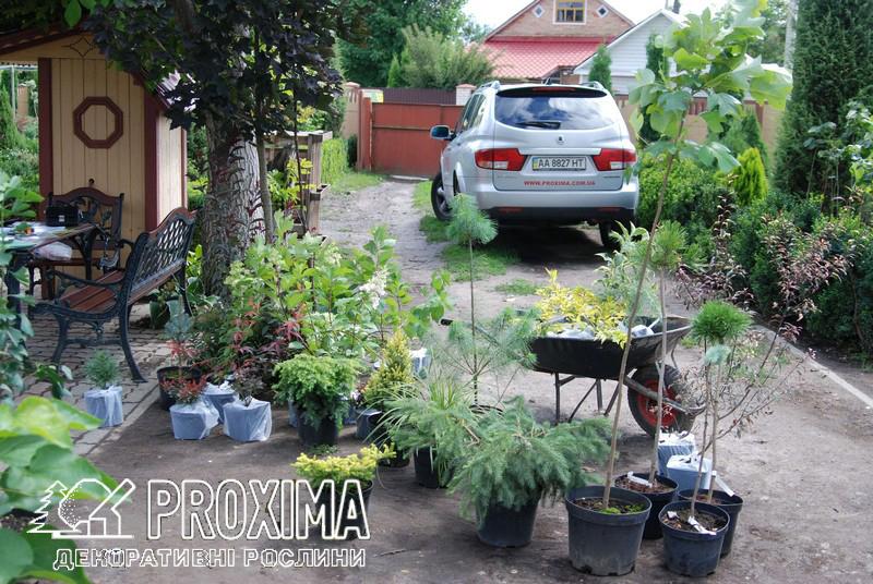 Садовый центр Киевская область киево-святошинский р-н