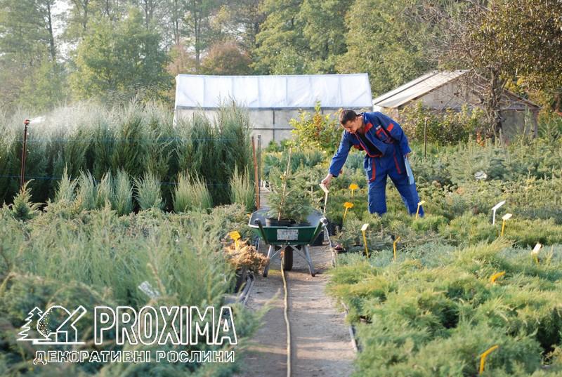 Відбір рослин на замовлення