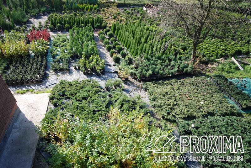 Торговий майданчик розсадника рослин Proxima