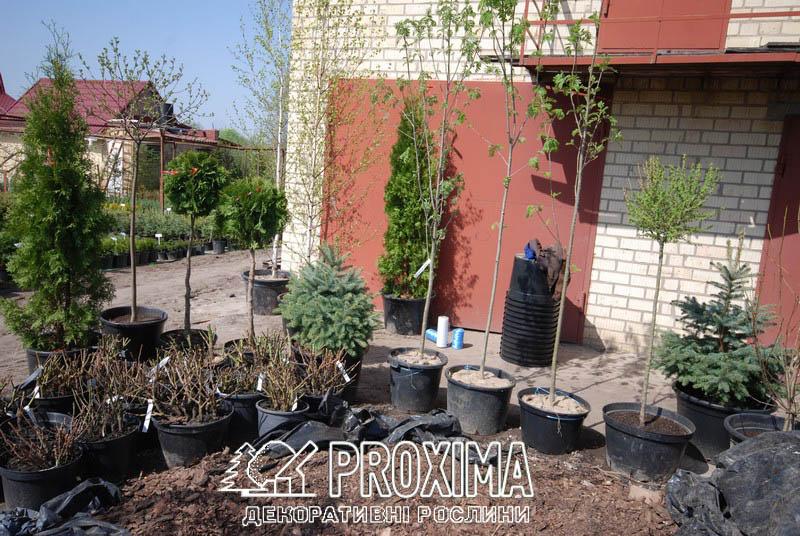 Декоративные растения для озеленения участка