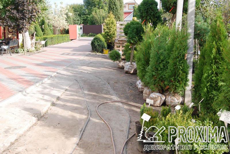 Декоративные растения садовый центр Киев