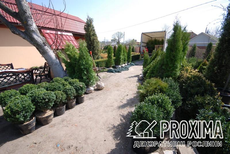 Доставка растений в украинский Донецк