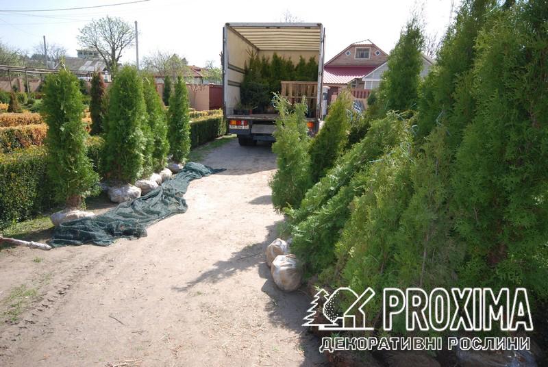 Доставка растений по Украине