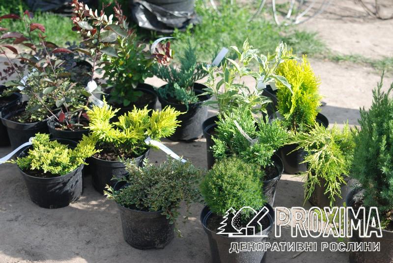 Заказ растений