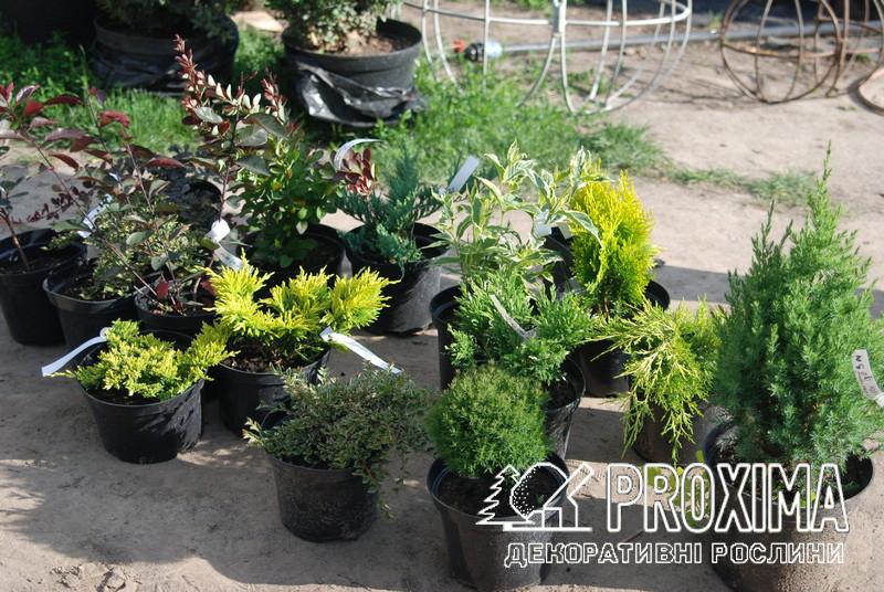 Интернет магазин растений с нормальной репутацией