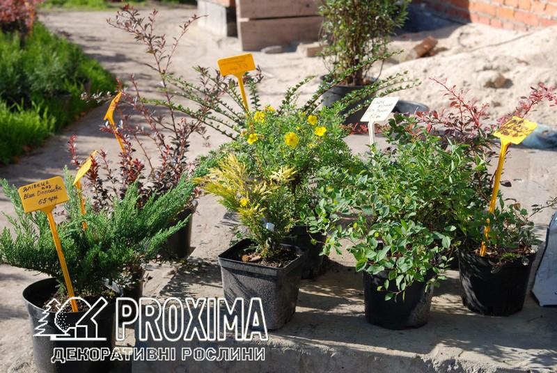 Качественные растения для вашего сада