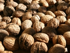 Грецкий орех сорта Казаку