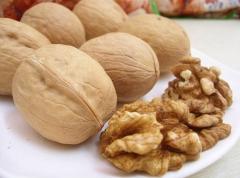 Волошский орех сорта Казаку