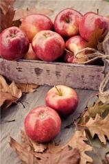 Яблоня домашняя Jonaprince
