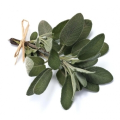 Salvia лікарська Пурпуресценс