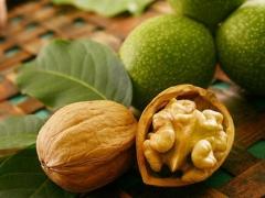 Греческий орех сорта Мирослава