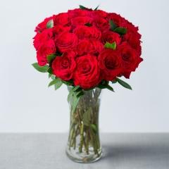 Rosa red Amadeus