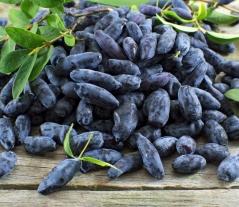 Жимолость съедобная Голубое Веретено<br>Lonicera edible Gоluboe Vereteno<br>Жимолость їстівна Блакитне Веретено